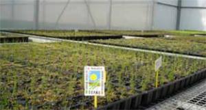 Superficie de producción ecológica