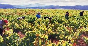 Bodegas Familiares Riojanas